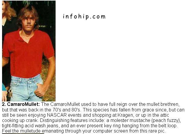the mullet species essay